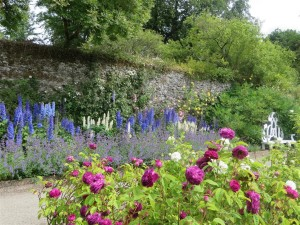 Delphinium border (2) (Medium)