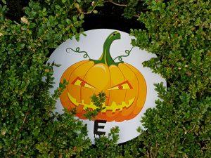 Halloween Mid-Term Break at Birr Castle