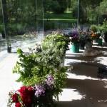 plantsalebirr (Medium)
