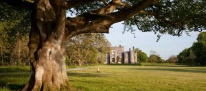 Birr Castle under tree