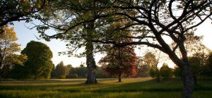 Become a Friend of Birr Castle Demesne